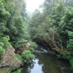 Creek in Galston Gorge