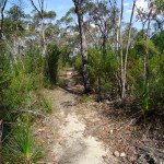 Great North Walk track