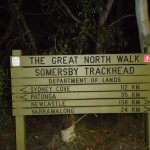 Somersby Ttack head